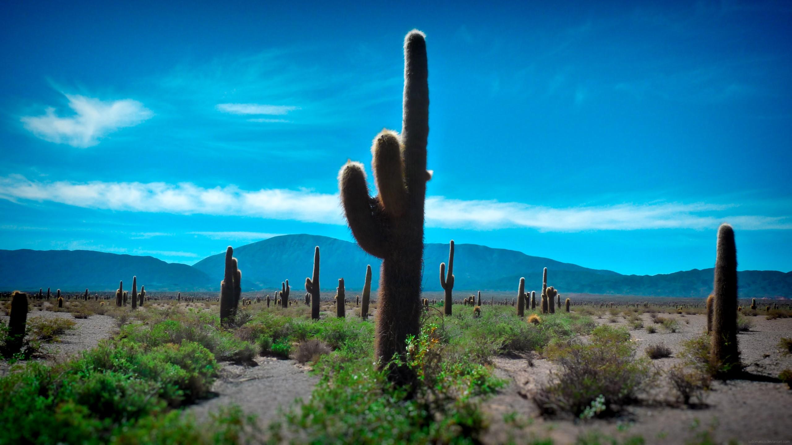 desert cactus wallpaper 2560x1440 19731 wallpaperup