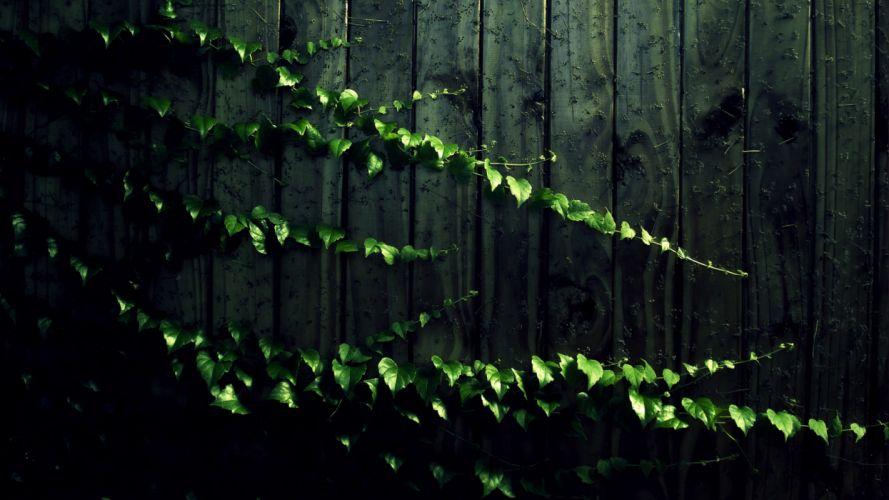 Wood leaves wood panels vines wallpaper