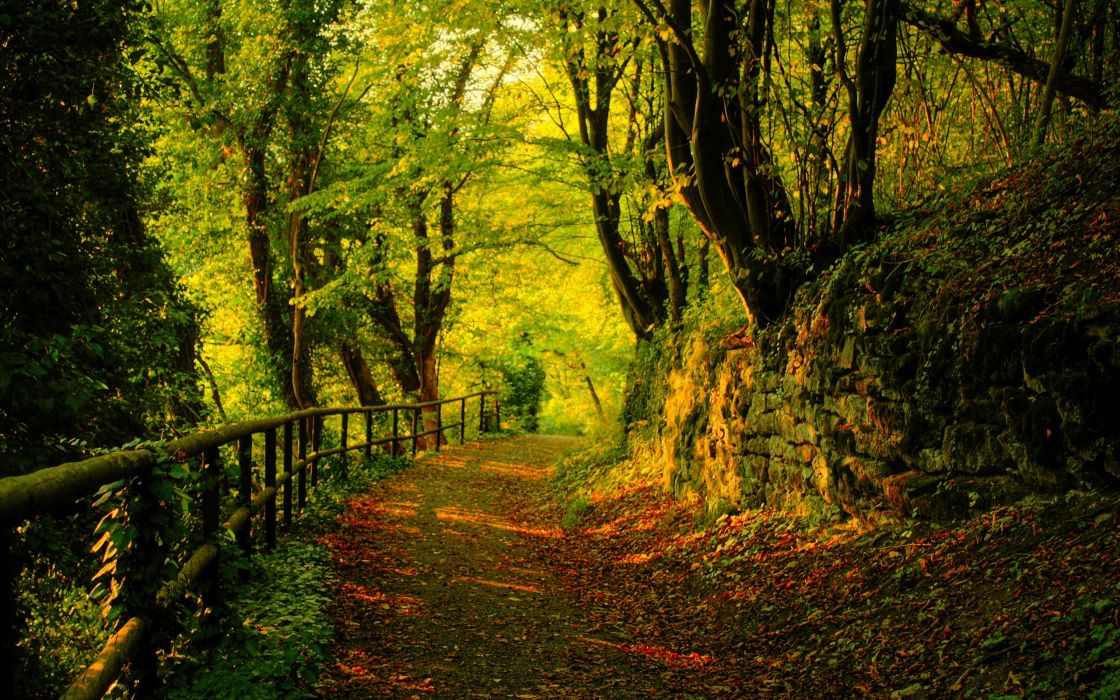 Nature trees forest path wallpaper