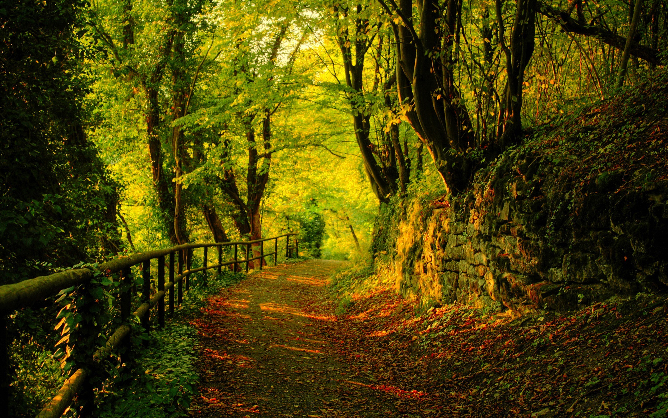 Nature trees forest path wallpaper  2560x1600  19836  WallpaperUP