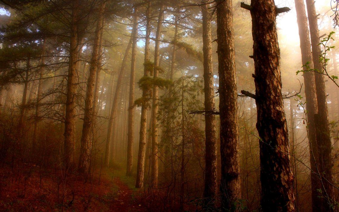 Nature forest mist wallpaper
