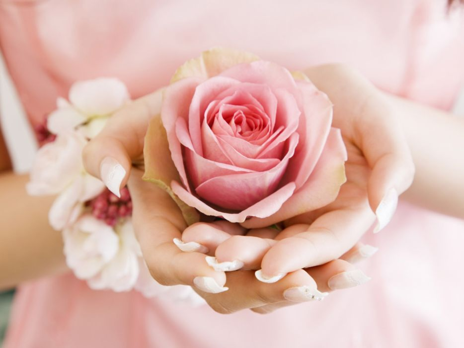Flowers pink hands roses wallpaper