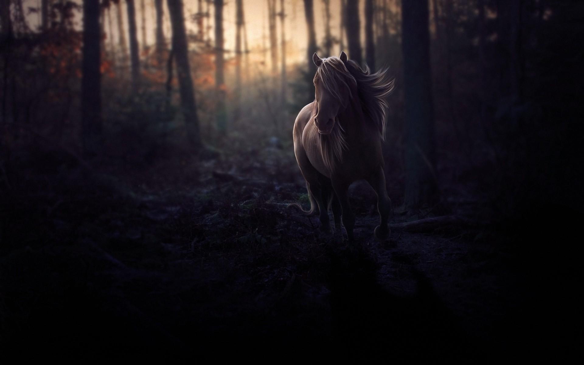 лошади тени ночь  № 359514  скачать
