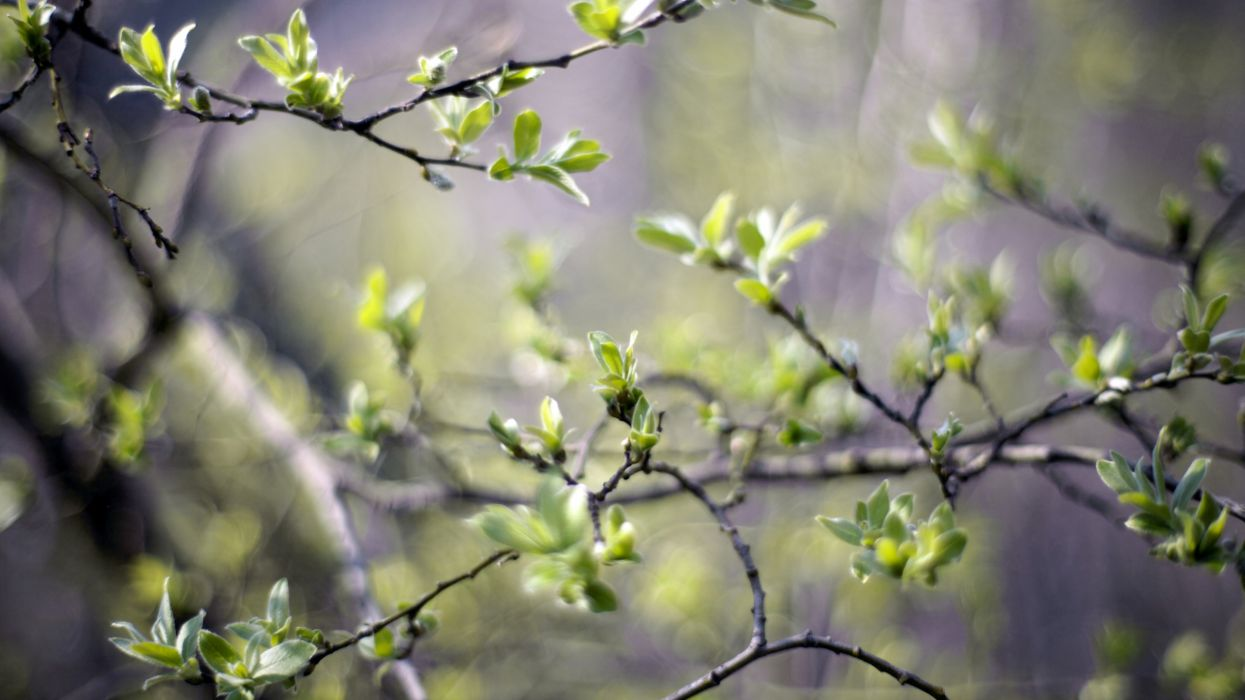 Green nature trees spring (season) plants wallpaper