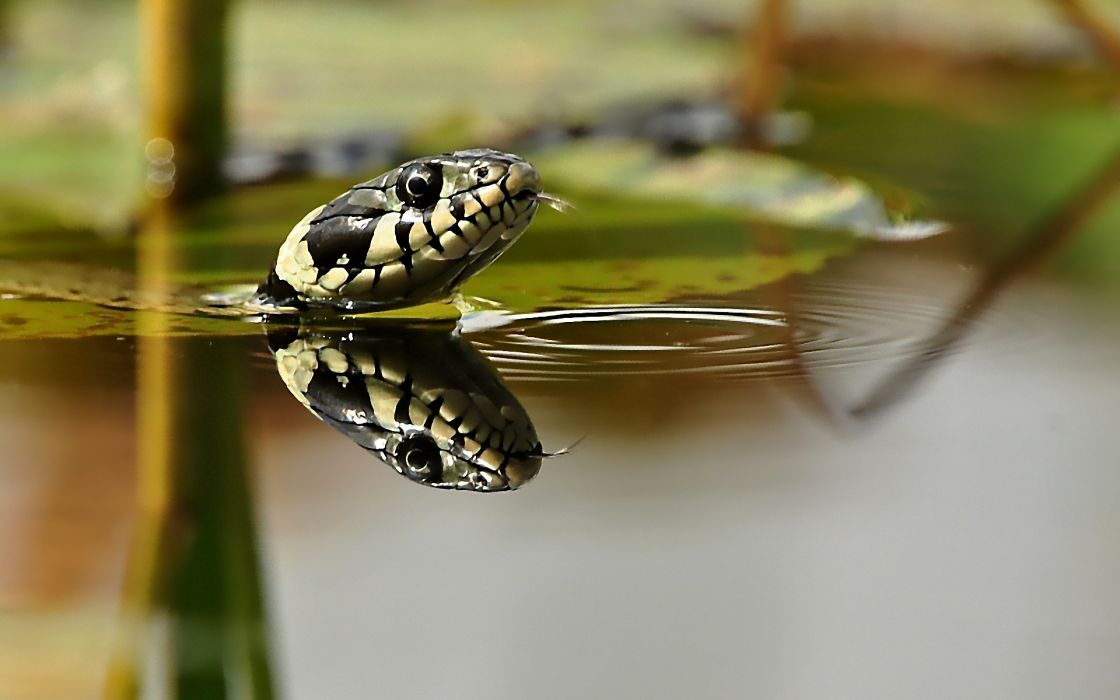 Water animals snakes wallpaper