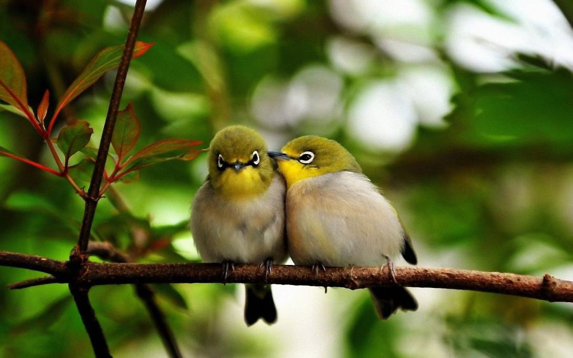 Nature birds wildlife depth of field wallpaper