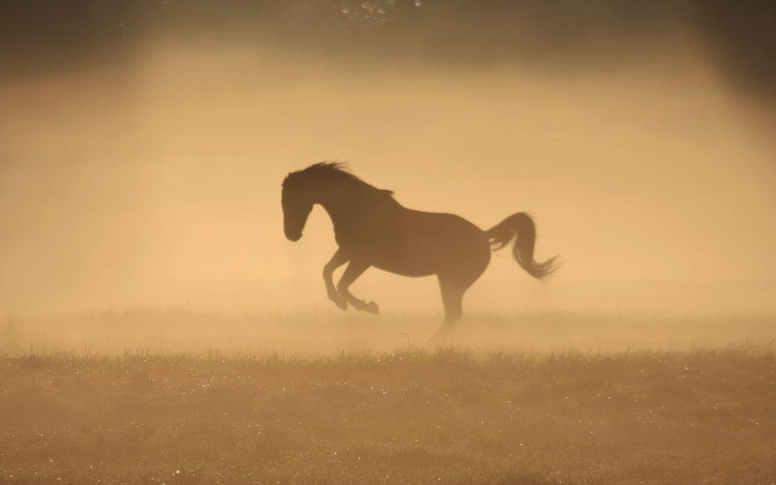 Animals horses monochrome wallpaper