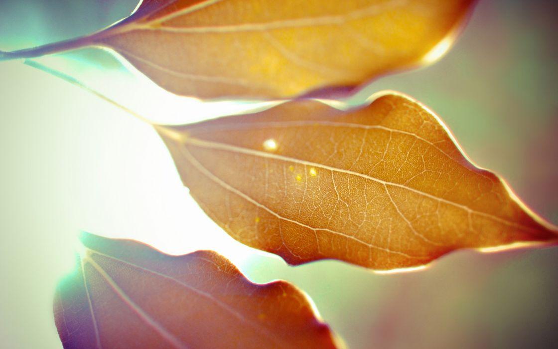 Nature leaves macro dreamy wallpaper
