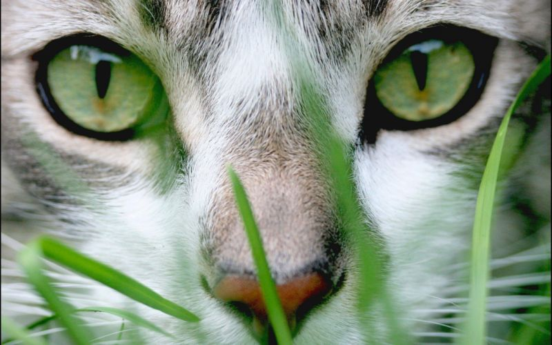 Up cats grass hunting wallpaper