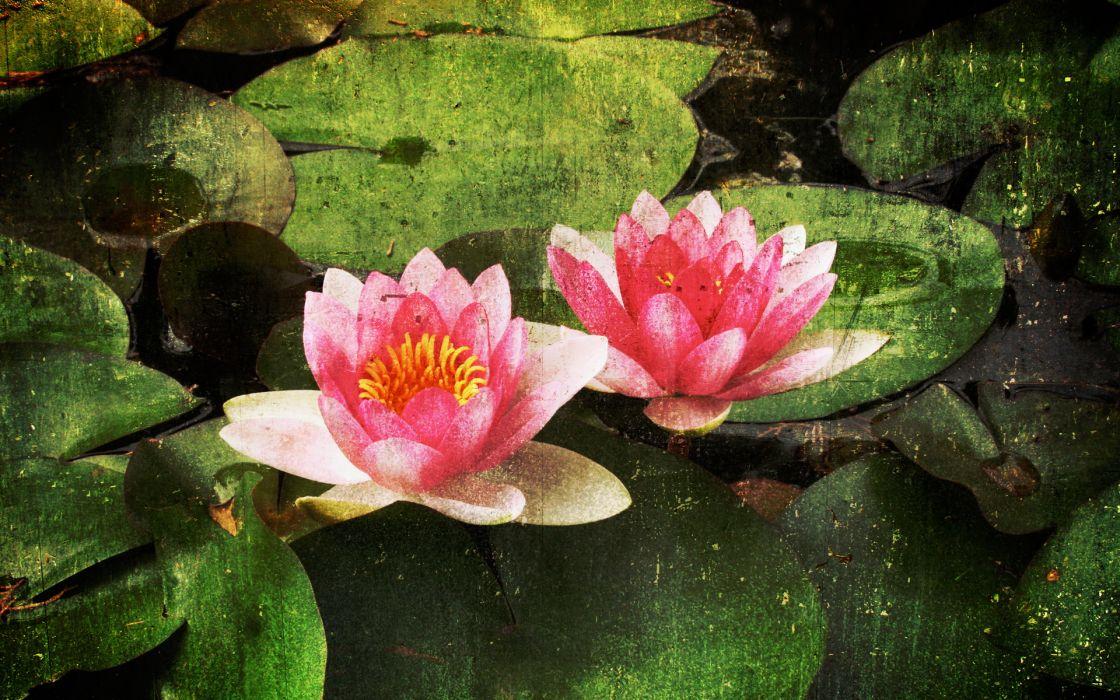 Paintings nature flowers artwork water lilies wallpaper
