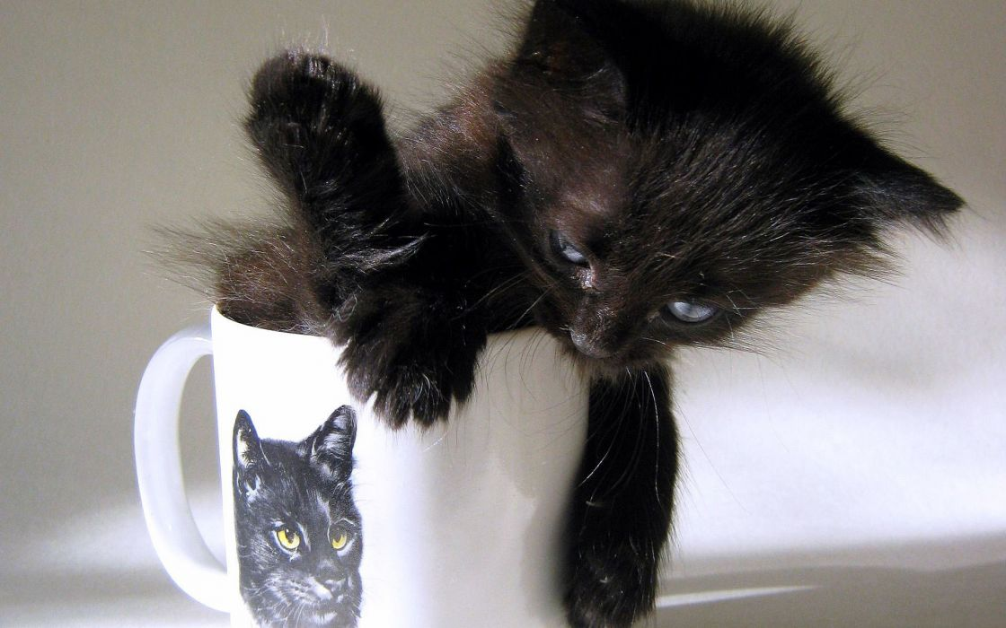 Cats funny kittens wallpaper