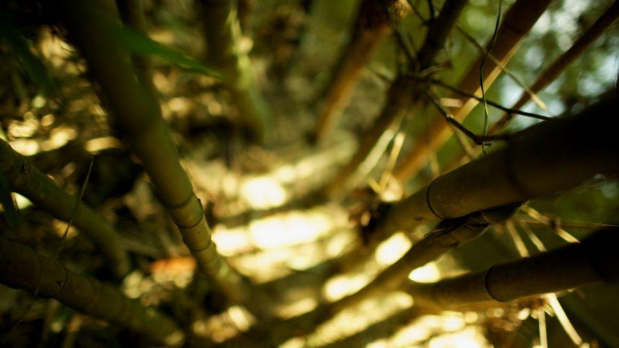 Nature bamboo sunlight wallpaper
