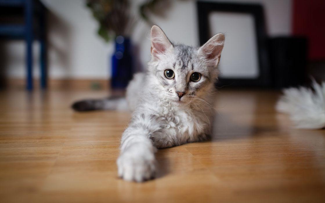 Cats animals yellow eyes wallpaper