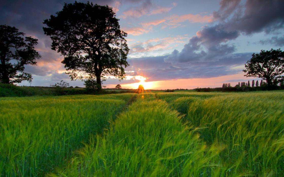 Sunset landscapes trees grass fields wallpaper