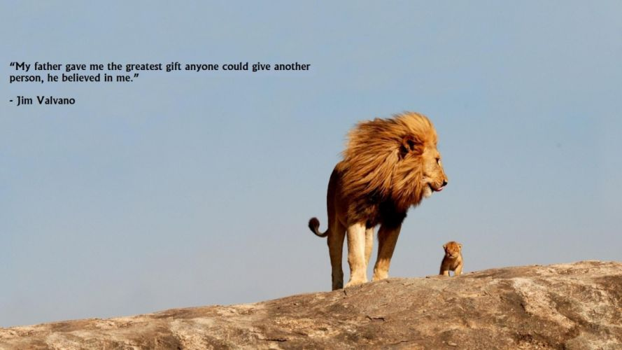 Animals quotes lions skyscapes wallpaper