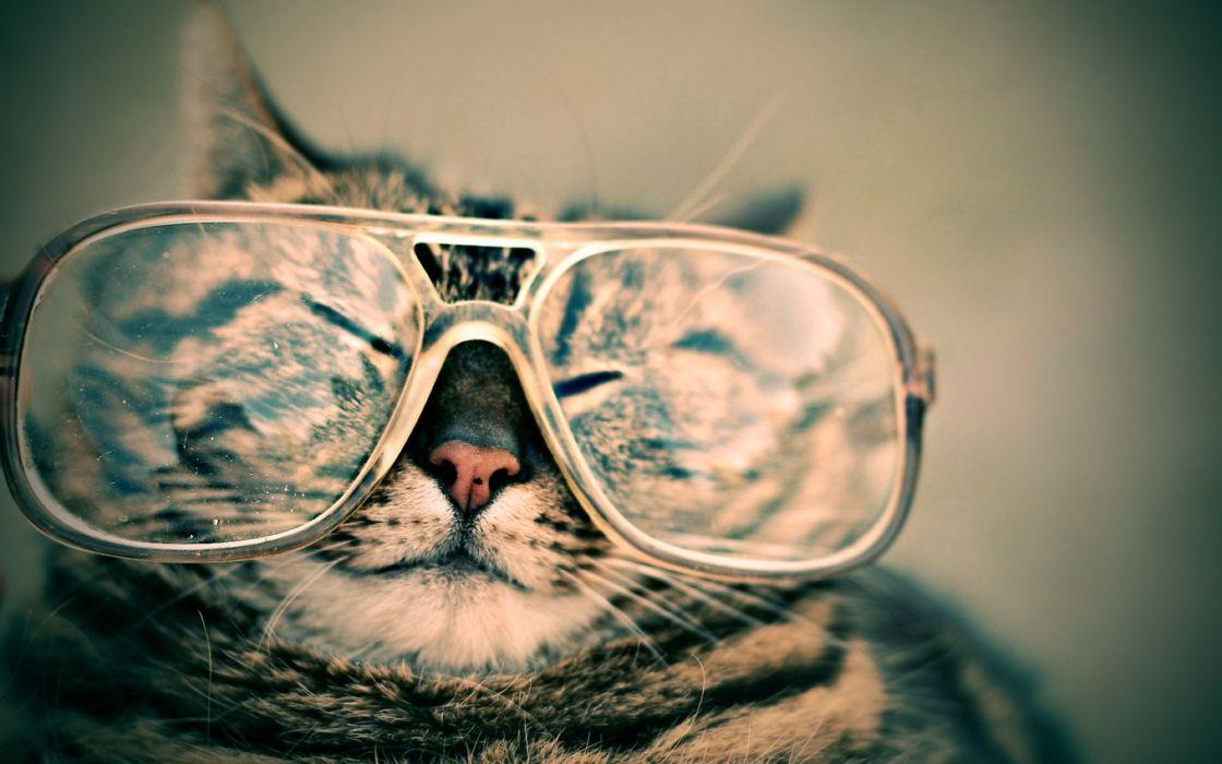 Cats glasses funny wallpaper