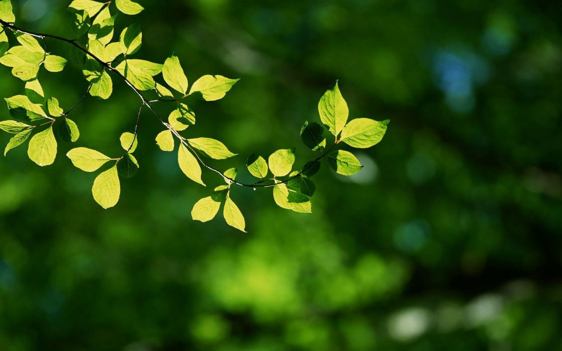 Nature forest leaves depth of field wallpaper