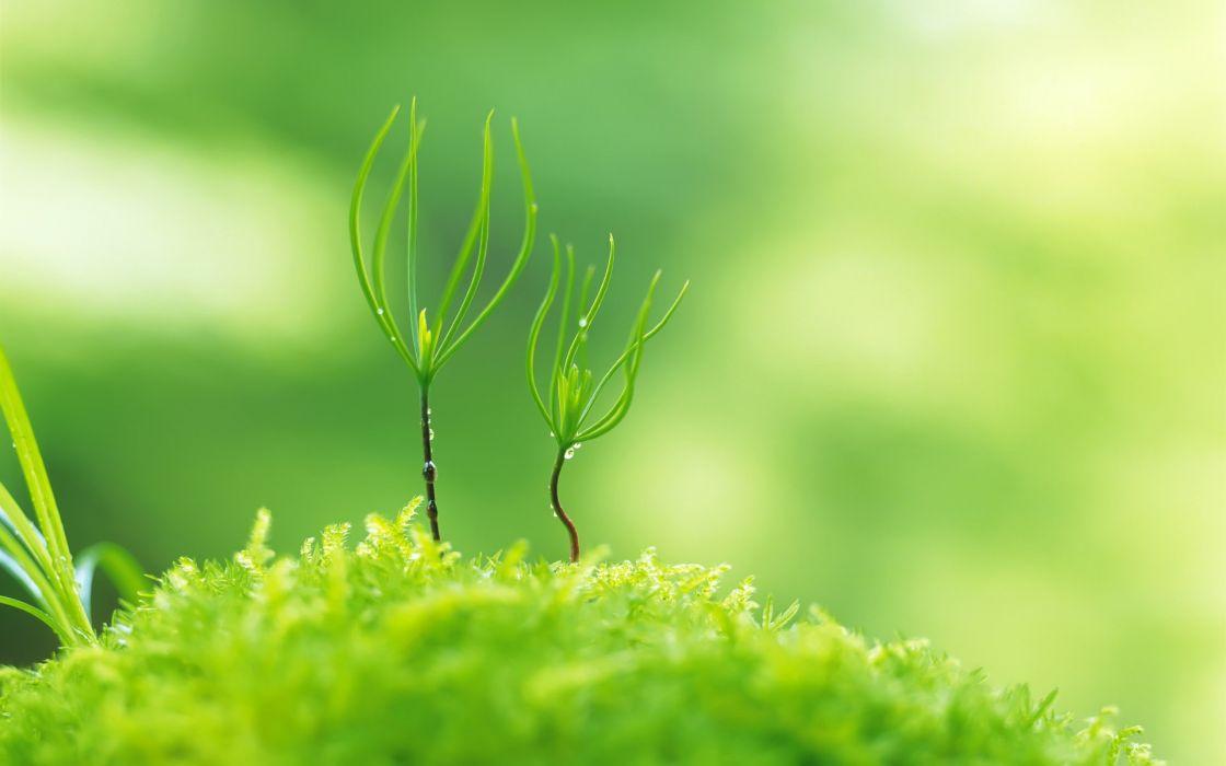 Green nature plants macro depth of field wallpaper