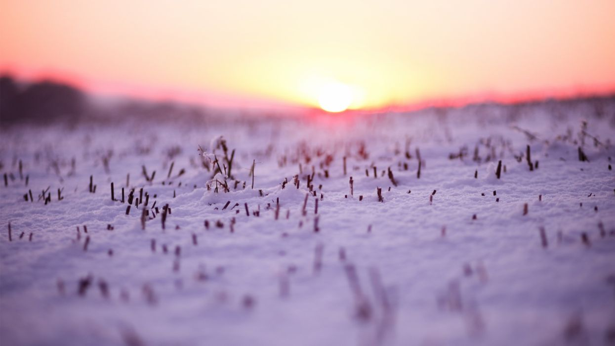 Sunset landscapes nature winter (season) snow macro depth of field wallpaper