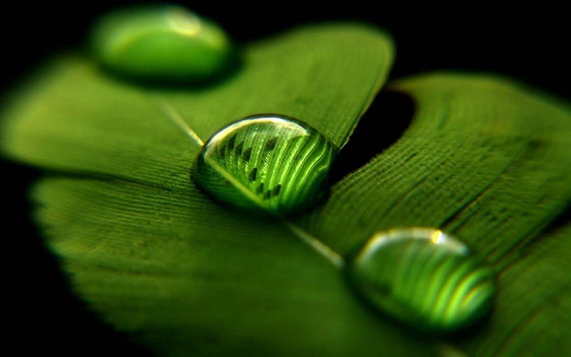 Up nature leaves water drops macro wallpaper