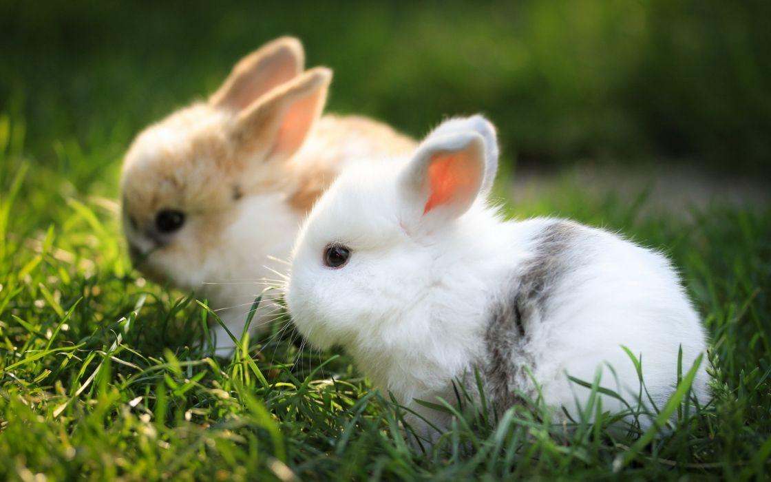 Bunnies animals grass wallpaper