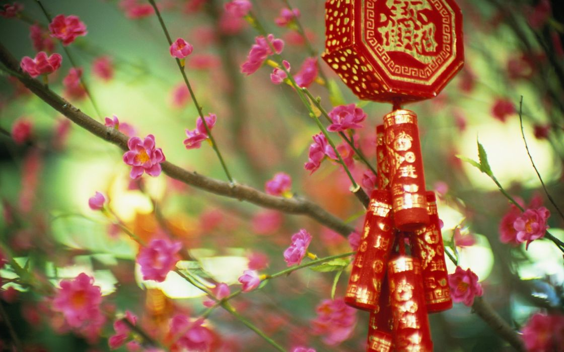 Flowers china signs wallpaper