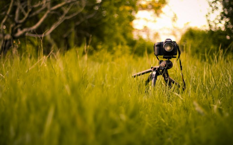 Nature grass cameras wallpaper