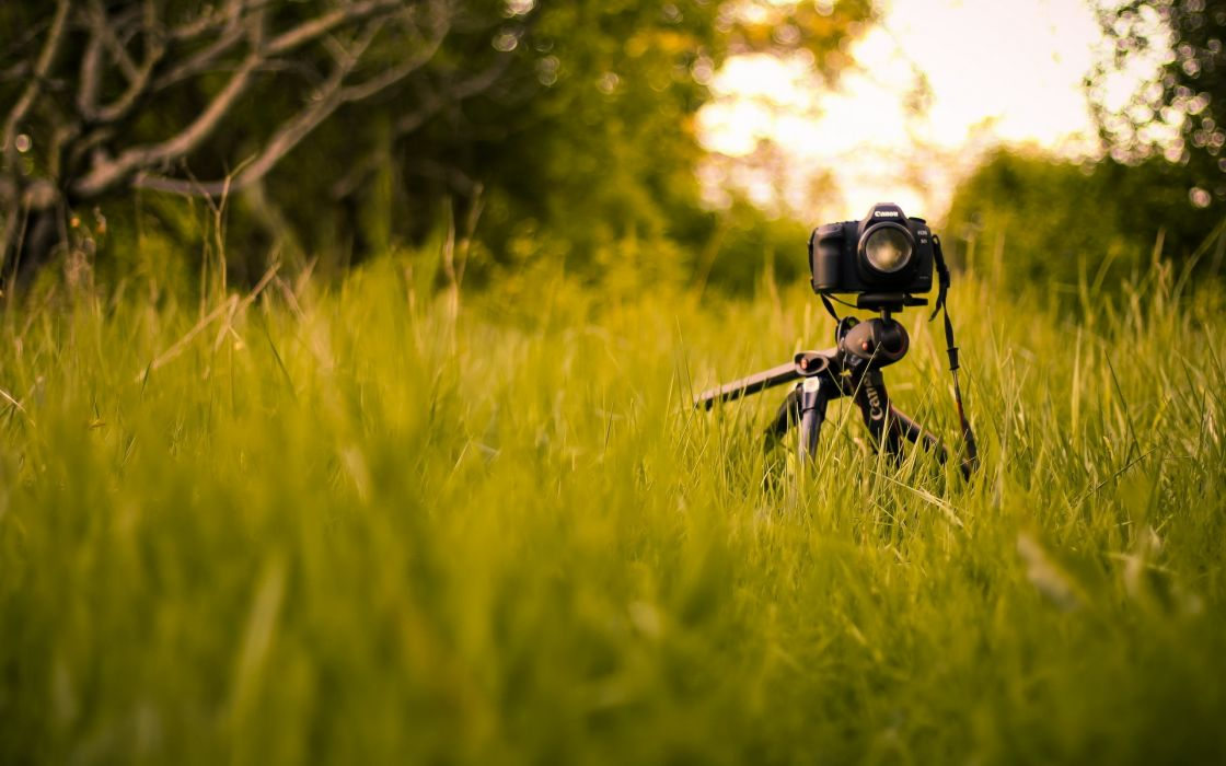 Nature grass cameras wallpaper