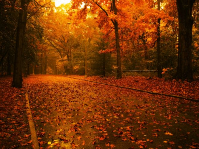 Nature trees architecture leaves path fallen leaves wallpaper