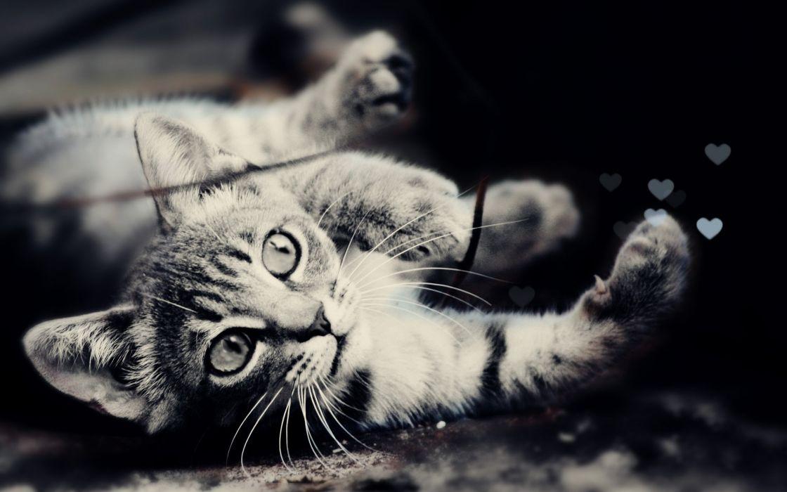 Cats animals deviantart kittens wallpaper