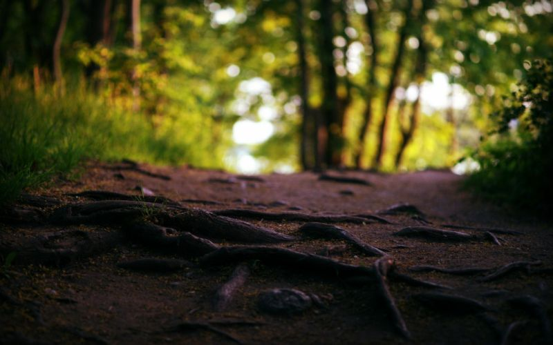 Landscapes nature trees forest roads macro roots wallpaper