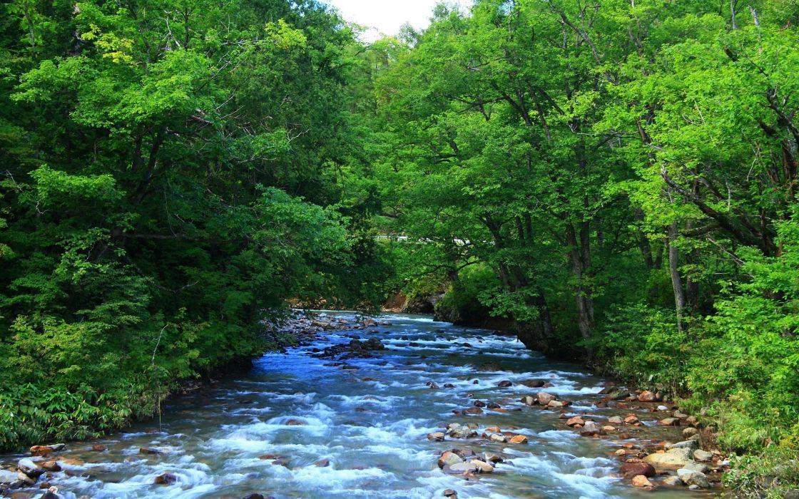 River between trees wallpaper