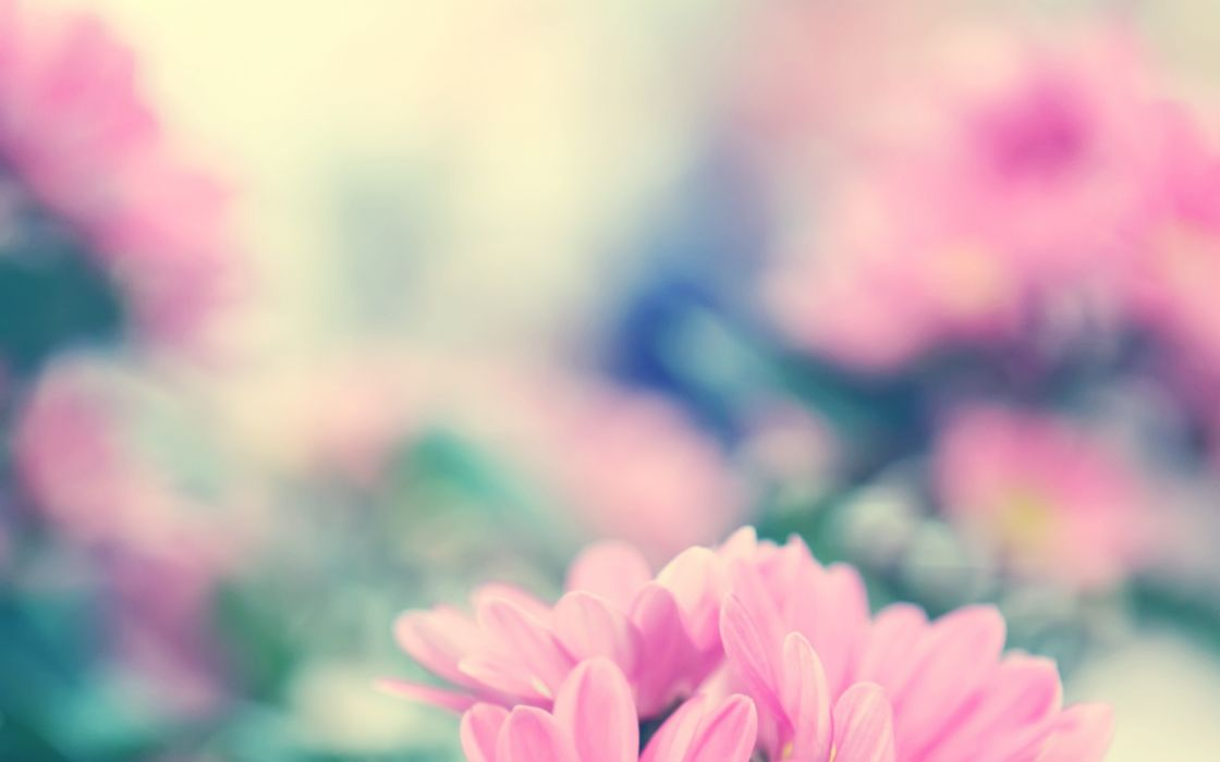 Nature pink flowers macro wallpaper
