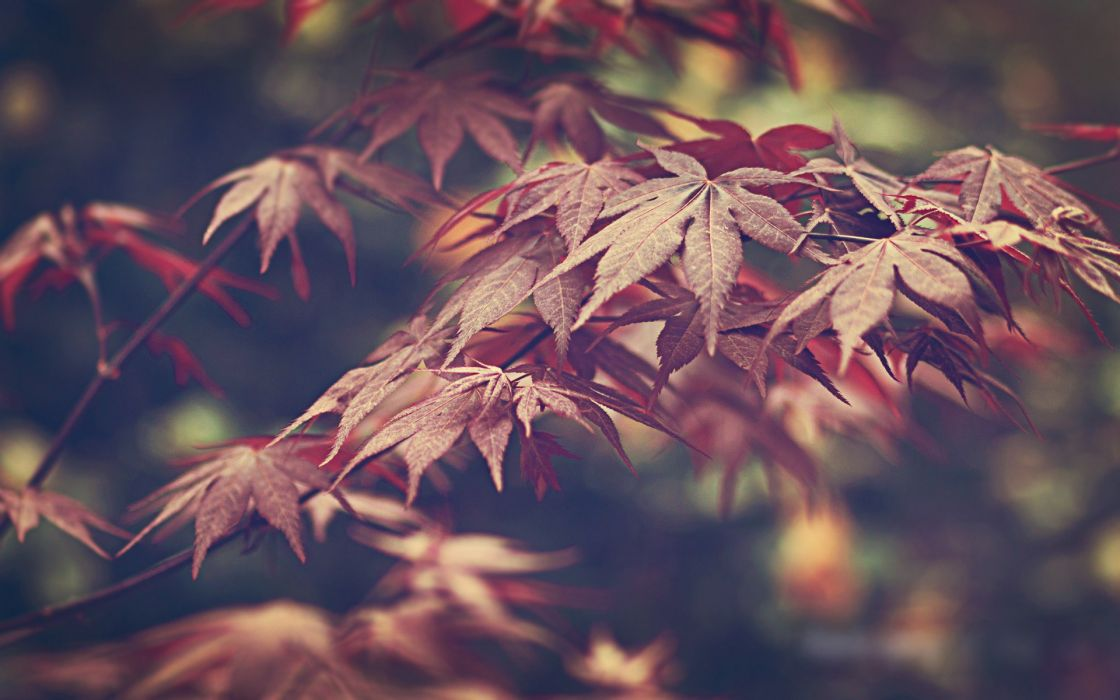 Nature leaves wallpaper