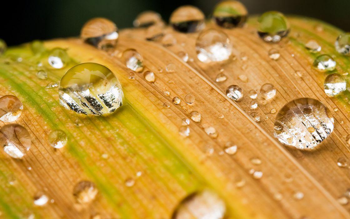 Water drops macro condensation wallpaper