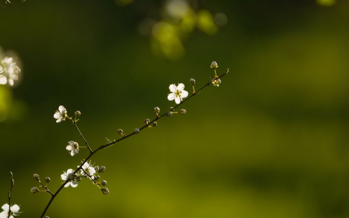 Nature flowers depth of field wallpaper
