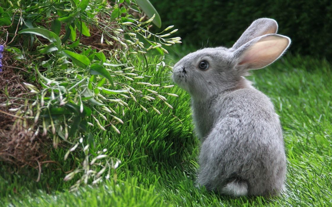 Bunnies animals rabbits wallpaper