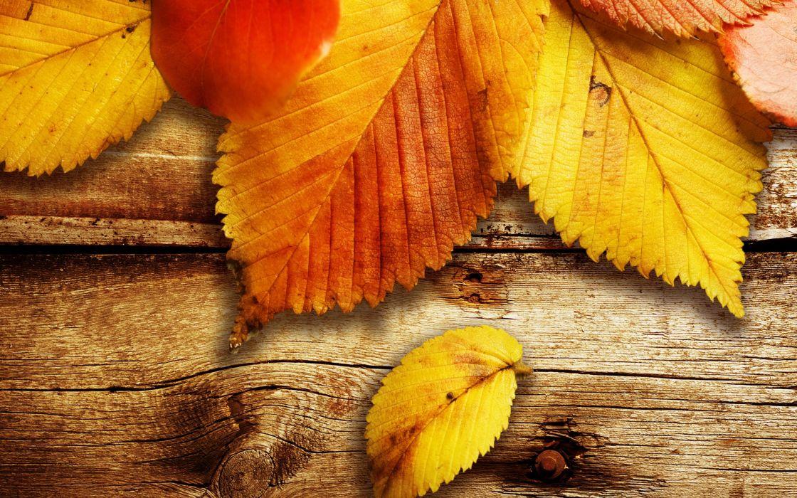 Nature autumn (season) wood leaves fallen leaves wallpaper