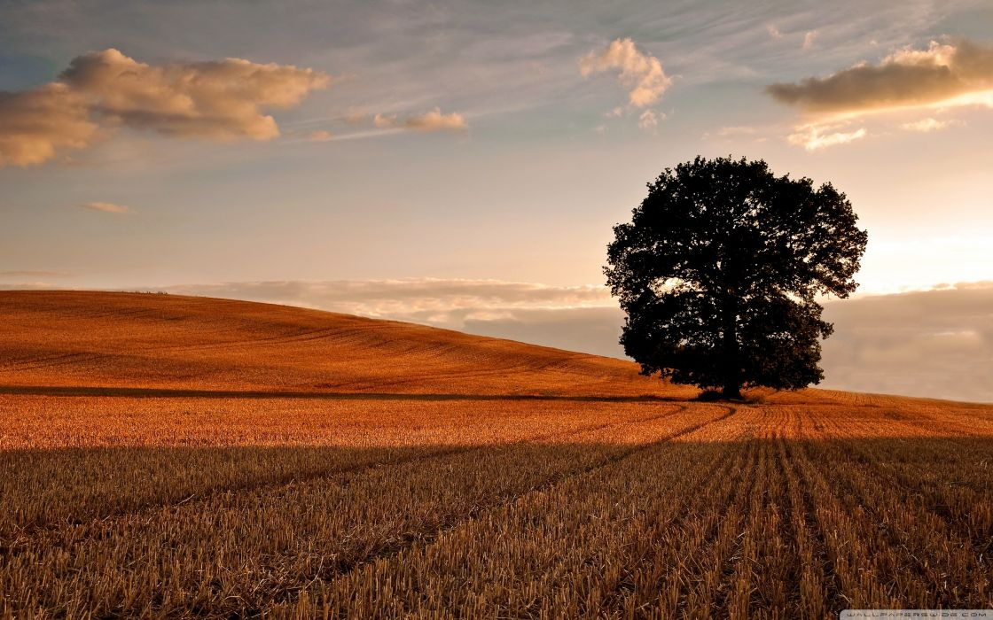 Nature trees autumn (season) fields wallpaper