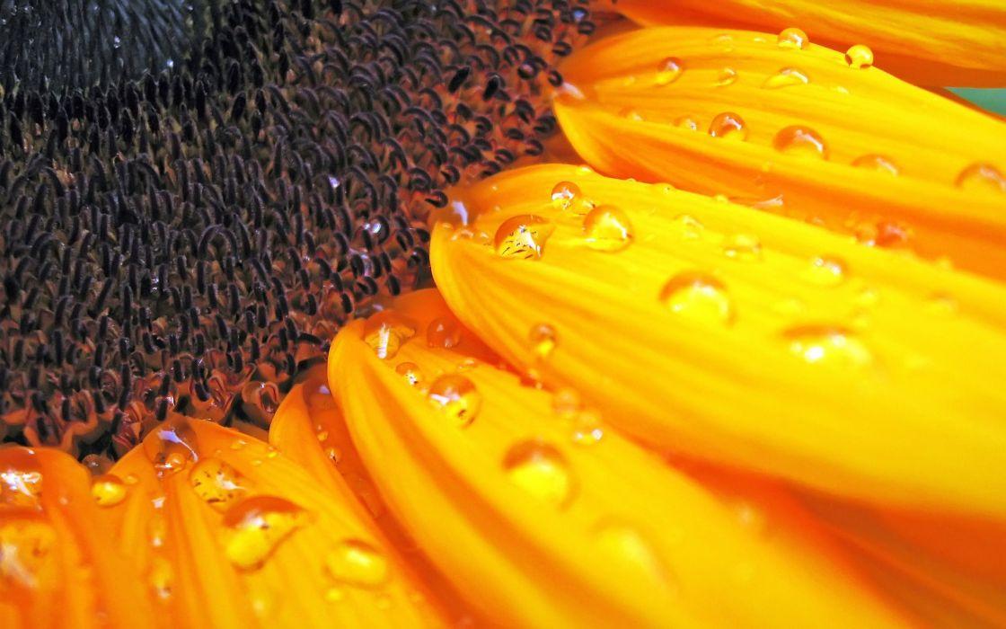 Flowers water drops macro wallpaper