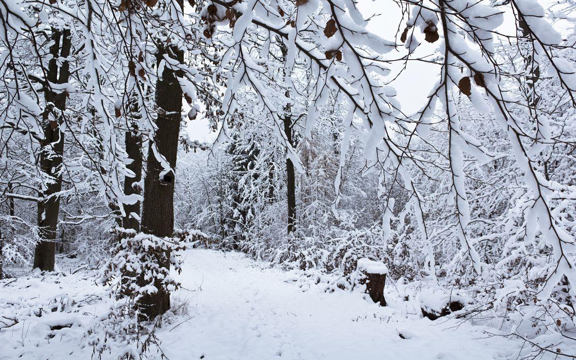 Winter snow forest wallpaper