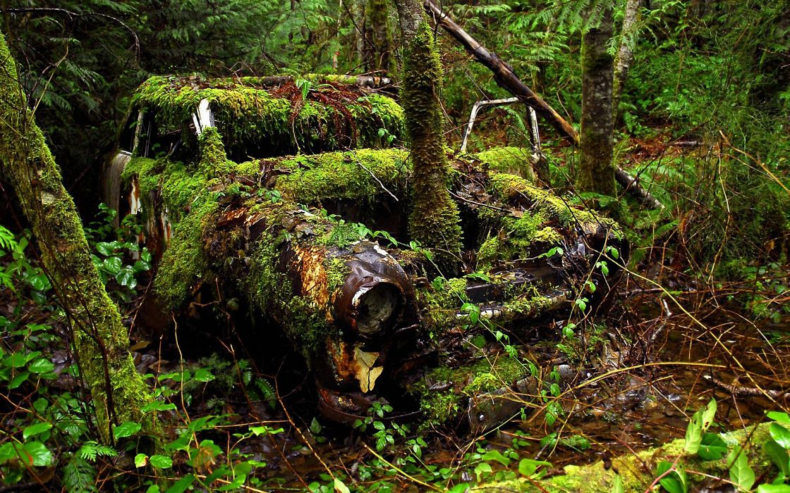 Nature trees ruins forest cars leaves grass moss wallpaper
