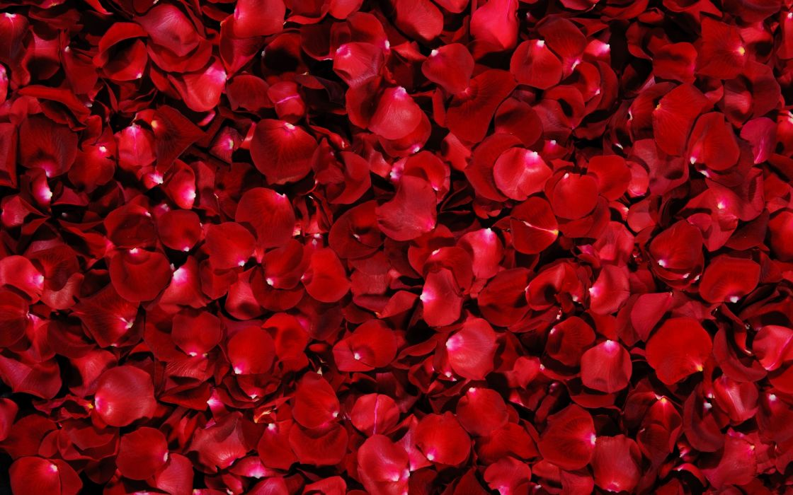 Flowers flower petals wallpaper