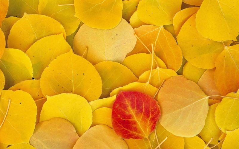 Autumn (season) leaves fallen leaves wallpaper