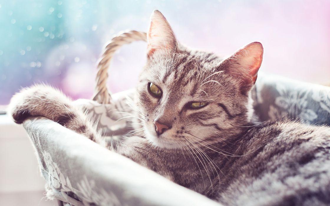 animals cats felines cute wallpaper