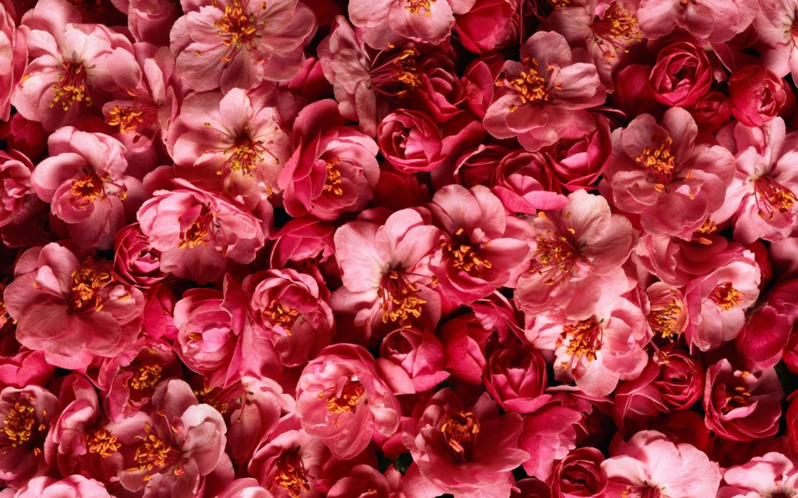 nature flowers abstract pink colors patterns wallpaper