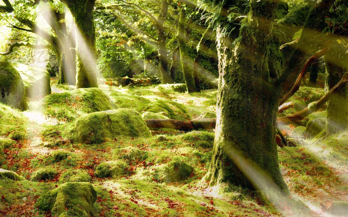 trees nature forests landscapes sunlight sunbeams sunrays spring seasons wallpaper