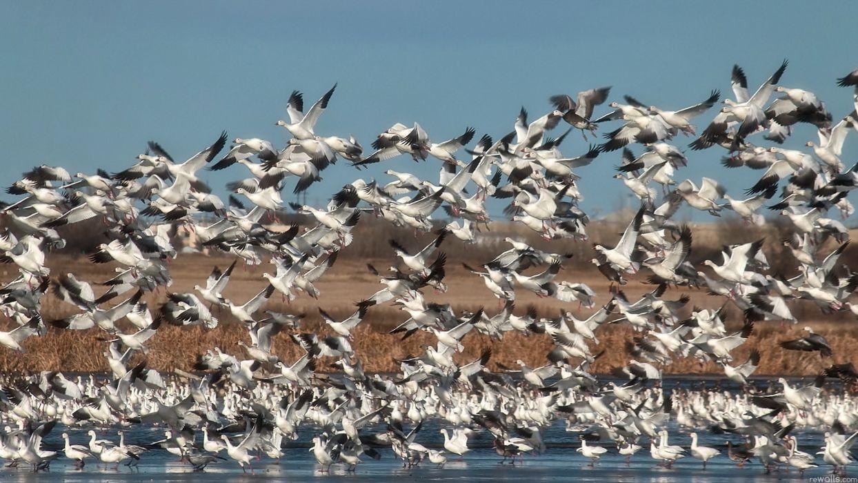 animals birds nature wallpaper