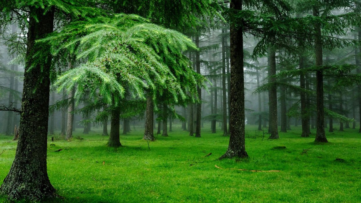 nature trees forests green wallpaper
