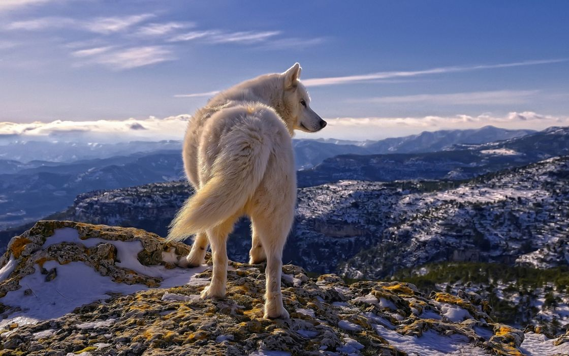 landscapes nature wolves mountains scenic cg manipulations digital-art wallpaper